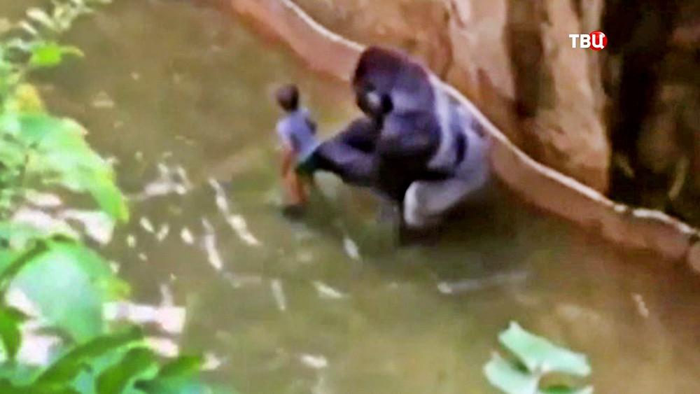 Горилла и ребенок в американском зоопарке