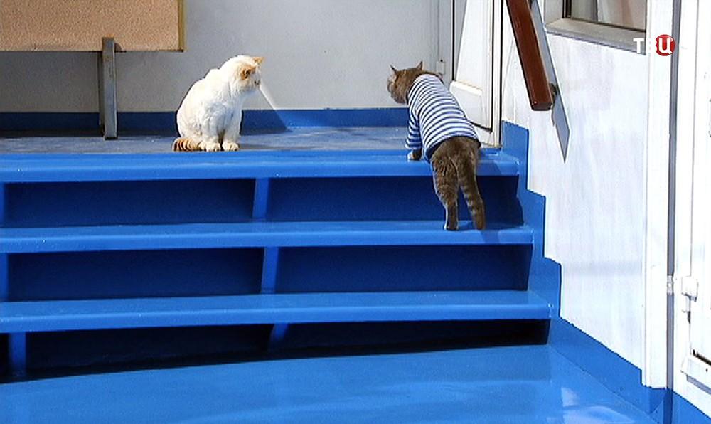Коты Матрос и Боцман на теплоходе