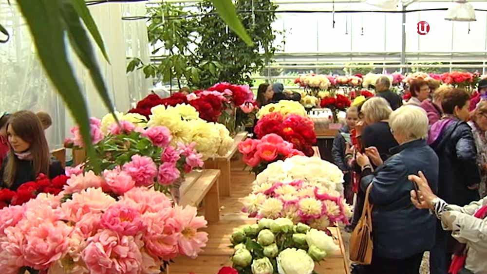 Выставка цветов в Аптекарском огороде