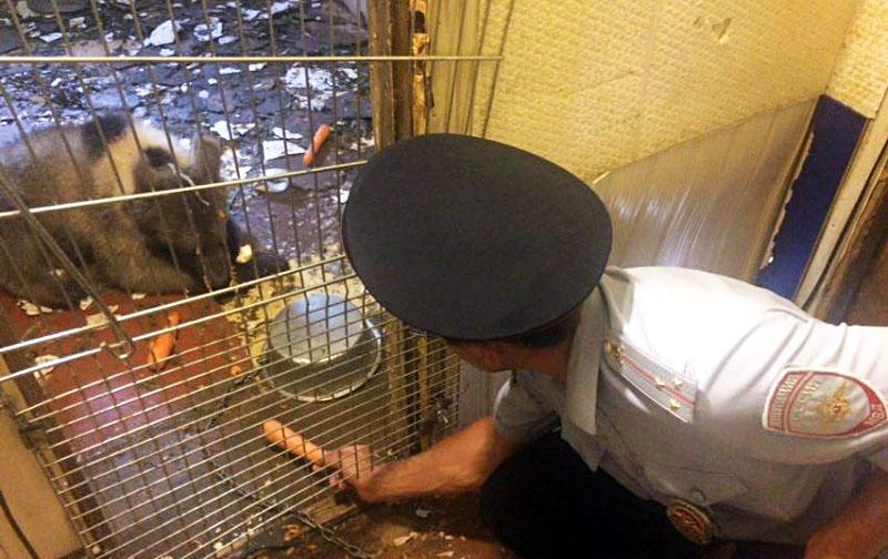 Полицейские нашли медвежонка в гаражном кооперативе