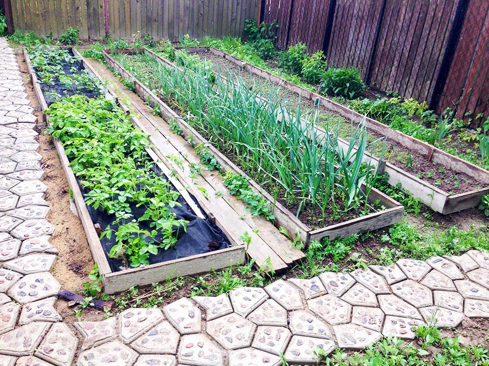 Градки на огороде