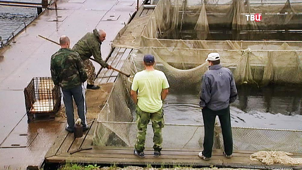 11Форелевая ферма на озере Суходольское наращивает производство