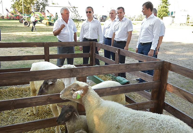 Председатель правительства России Дмитрий Медведев во время посещения крестьянско-фермерского хозяйства