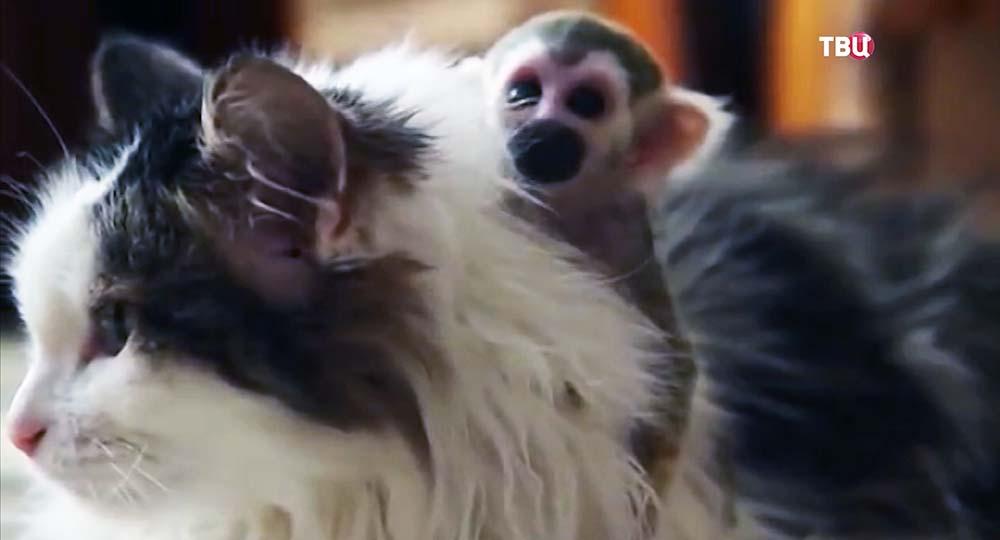 Детеныш обезьяны под опекой кошки
