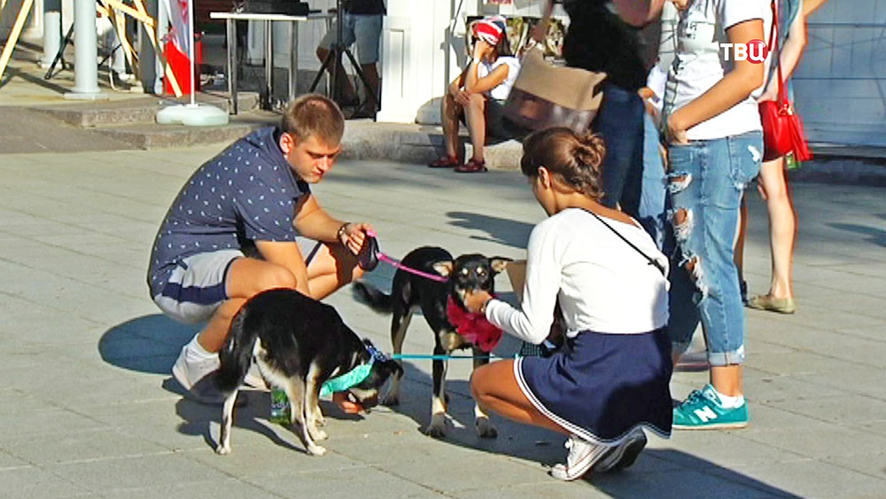 Хозяева с собаками