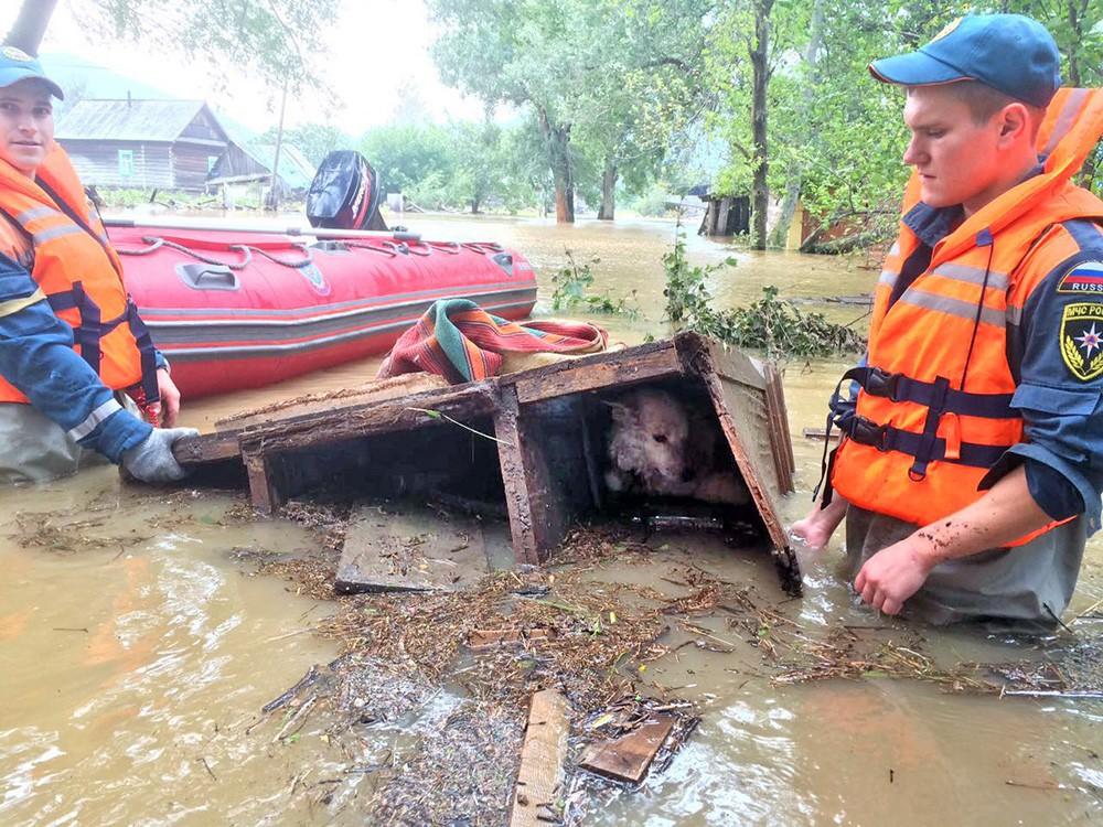 Спасатели МЧС спасают собаку в зоне паводка