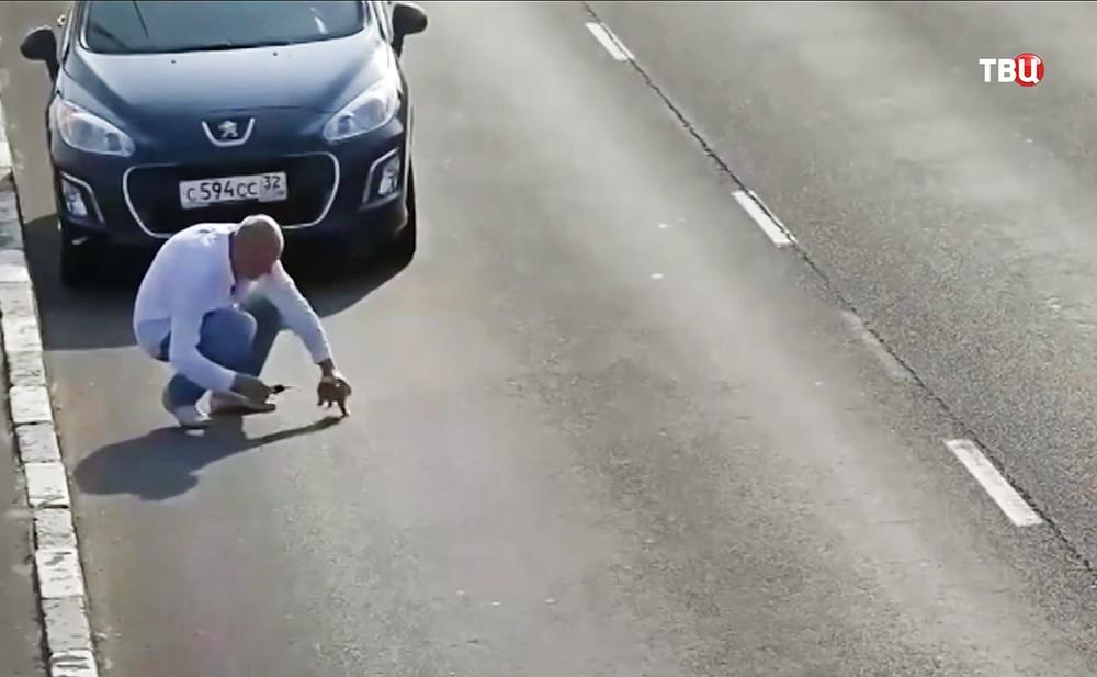 Водитель спасает котенка на трассе в Калининграде
