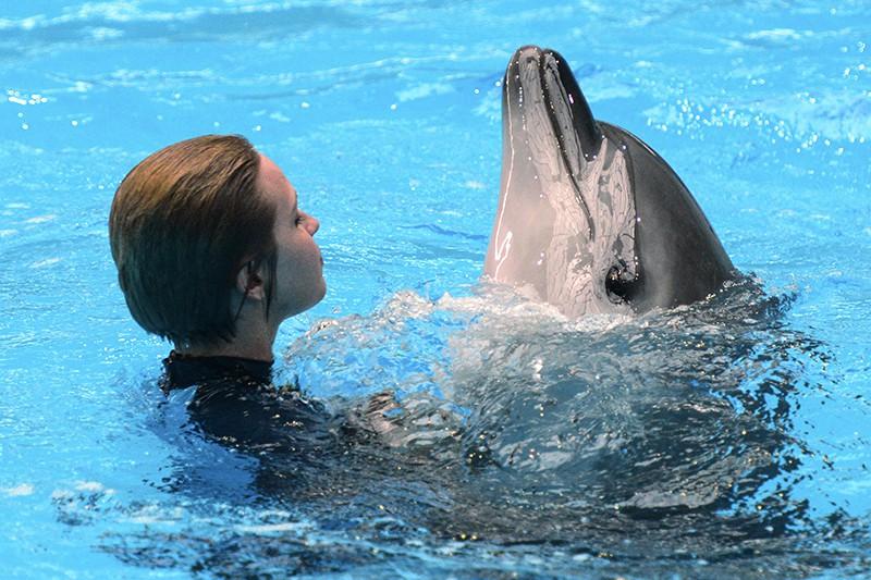 Дельфин и человек