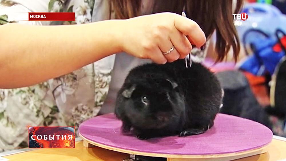 """Выставка домашних животных """"Зоопалитра"""""""
