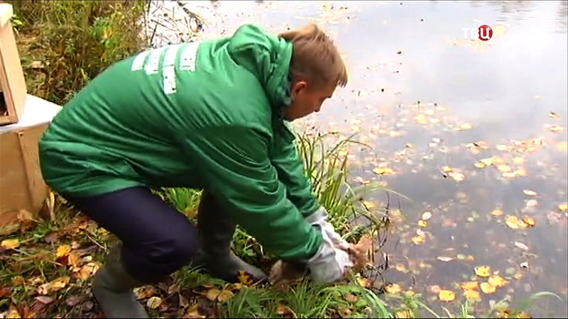 Сотрудники Центра реабилитации Департамента природопользования Москвы выпускают  животных