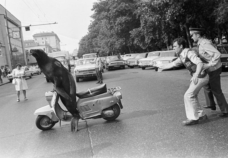 Сивуч Капа на мопеде и дрессировщик Юрий Захаров (справа). Около Цирка на Цветном бульваре