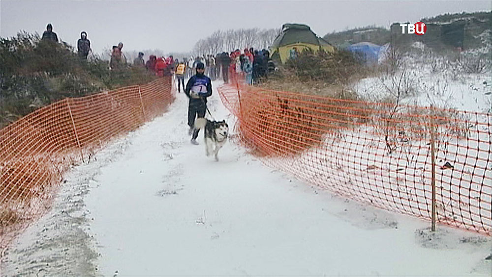 Чемпионат по ездовому спорту на собаках