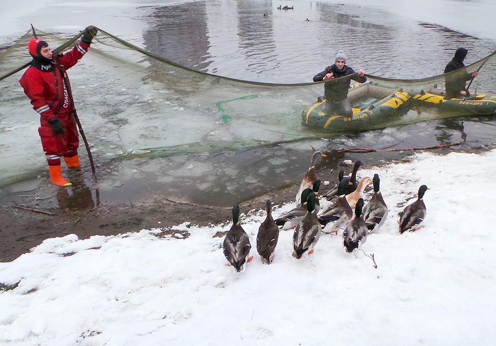 Сотрудники МЧС спасают уток из замерзающего пруда в Москве