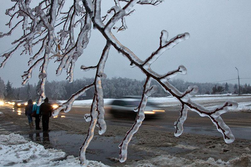 Лед на ветках деревьев