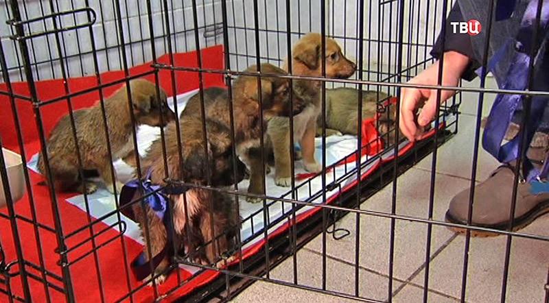 Щенки собаки-роженицы из метро