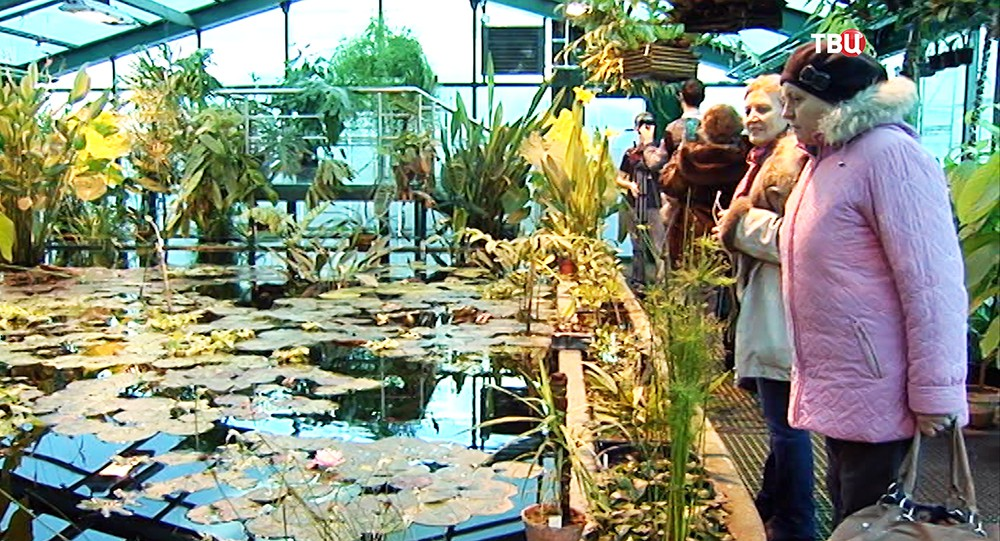 Тропическая оранжерея в Аптекарском огороде