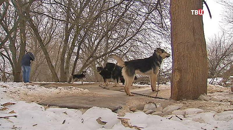 Группа собак
