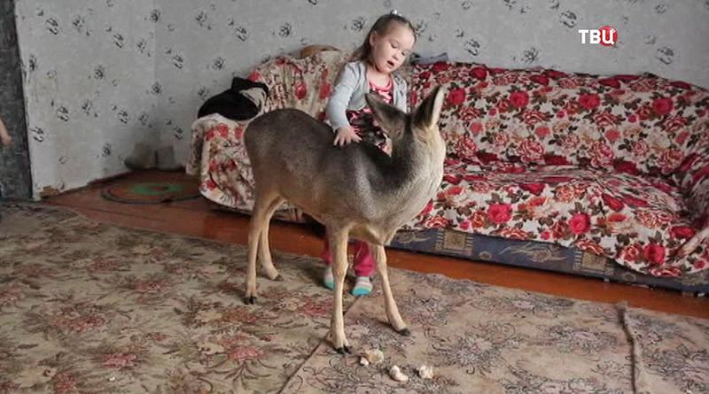 Ребенок играет с косулей
