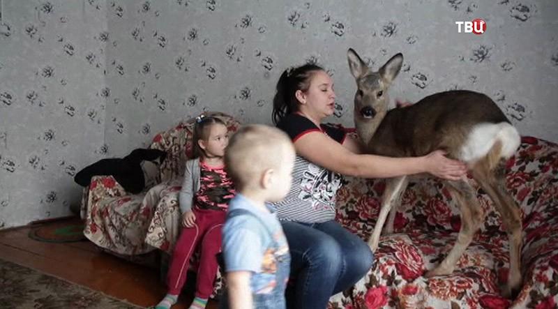 Дети играют с косулей