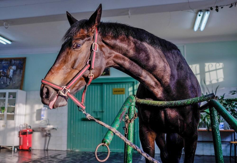 Лошадь в ветеринарном блоке