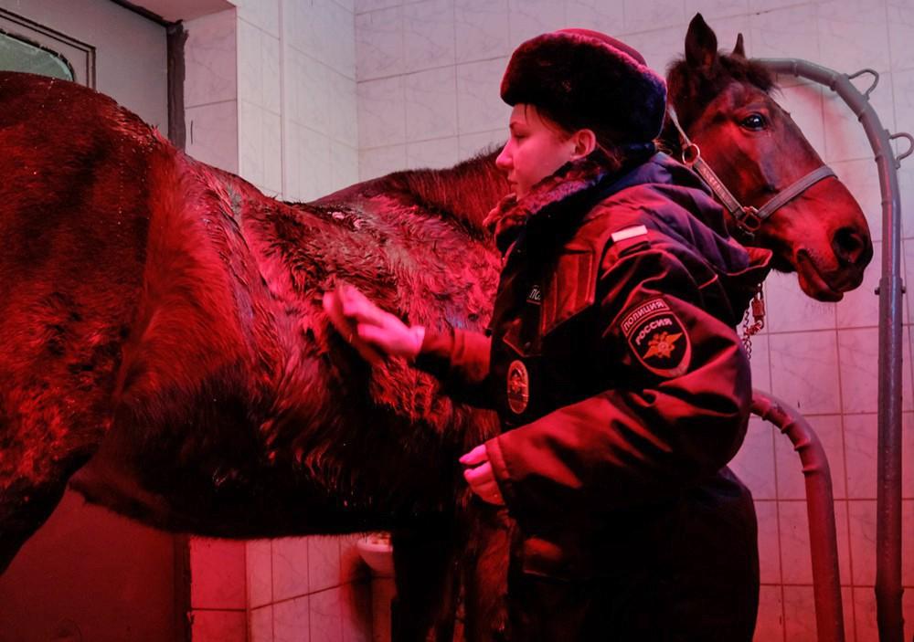 Сушка лошади в солярии