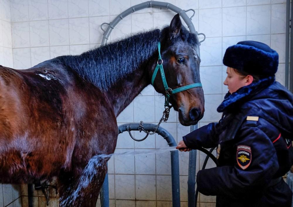Мойка лошади