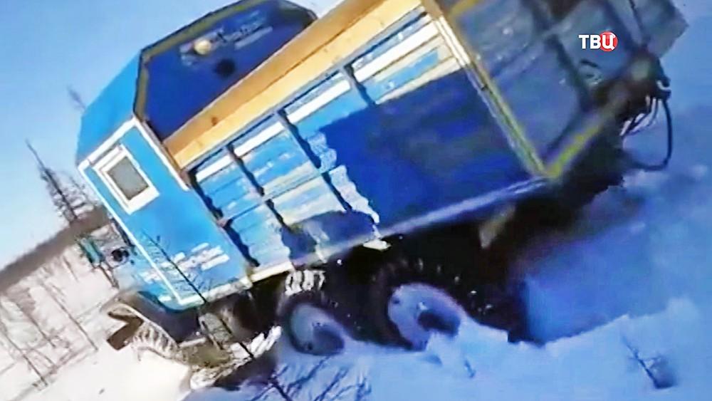Вахтовики давят грузовиками медведя в Якутии