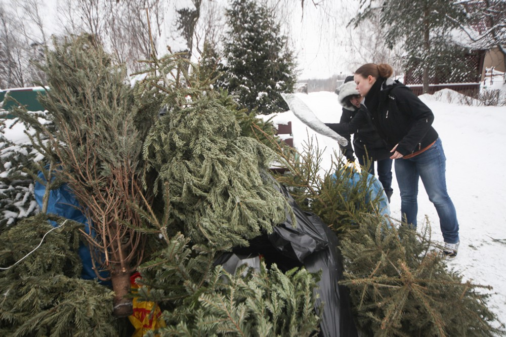 Утилизация новогодний елок
