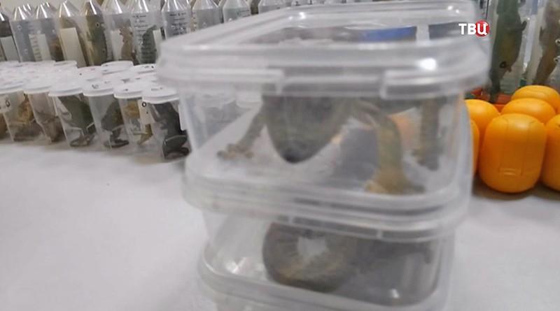 Изъятые рептилии