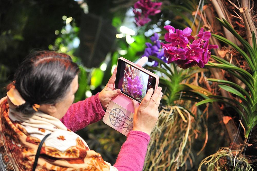 """Выставка орхидей в """"Аптекарском огороде"""""""