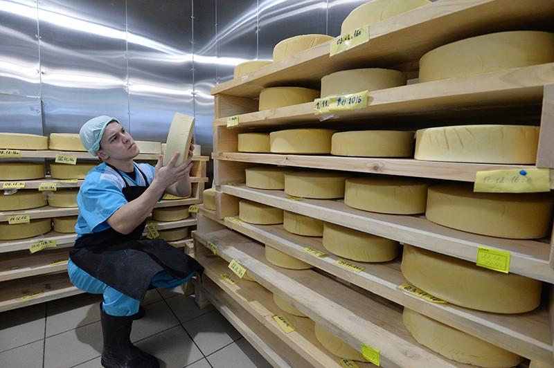 Камера для созревания сыров твердых сортов