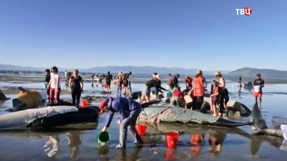 В Новой Зеландии дельфины выбросились на берег