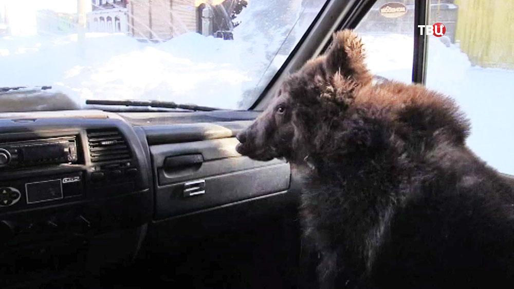 Медвежонок в машине
