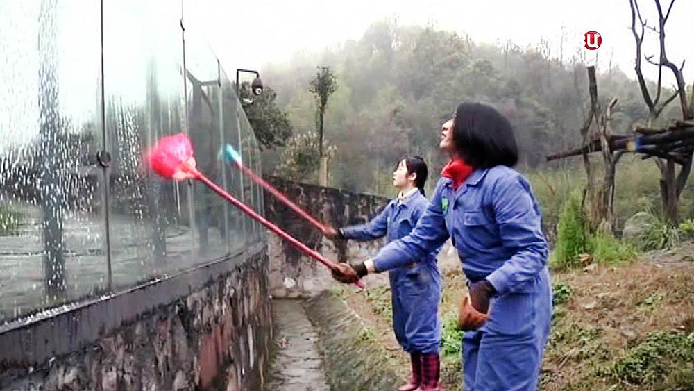 Служащие зоопарка моют вольер панды