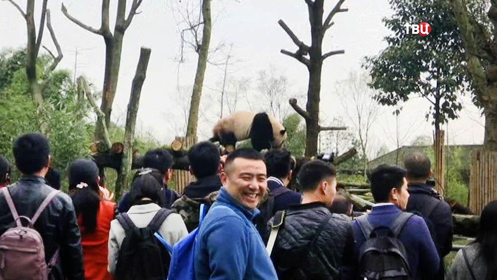 Гигантская панда в китайском зоопарке