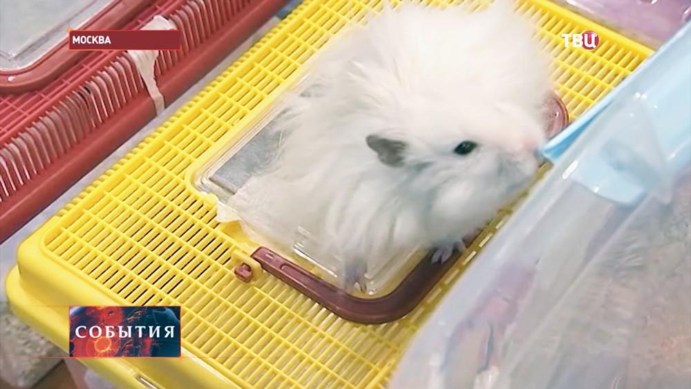 Выставка мелких домашних животных в Москве