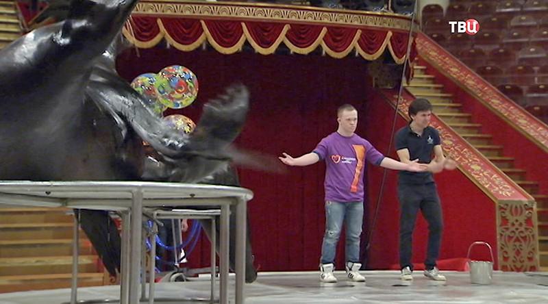 Артисты выступают в цирке