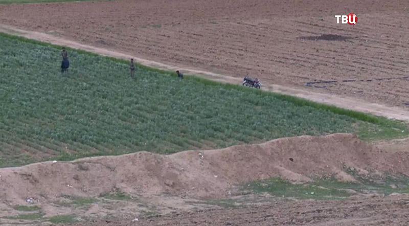 Уборка урожая в Сирии