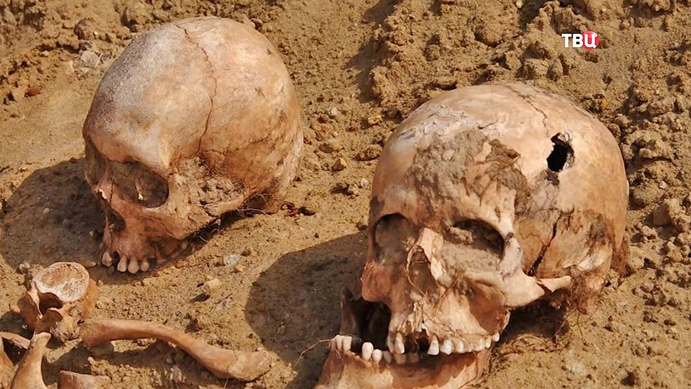 Массовое захоронение времен ВОВ обнаружили на Волыне