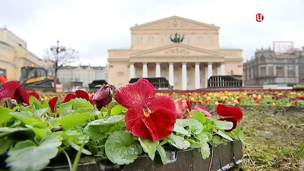 Цветочная клумба на фоне Большого театра
