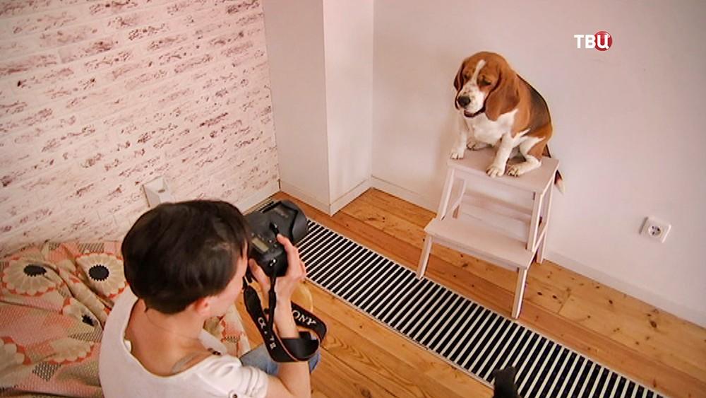 Хозяйка фотографирует собаку