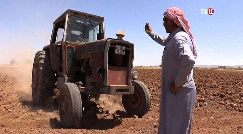 Сбор урожая в Алеппо