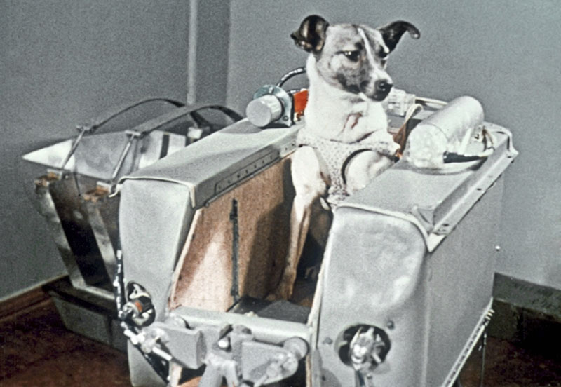 Собака Лайка в контейнере 2-го советского искусственного спутника Земли