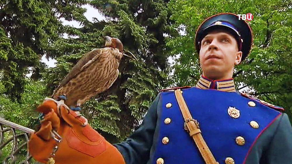 Сокол-сапсан и орнитологическая служба Кремля