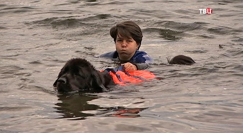 Собака-спасатель на тренеровке