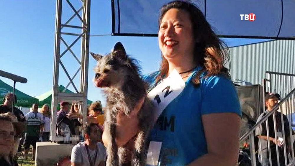 Конкурс на самую уродливую собаку в мире