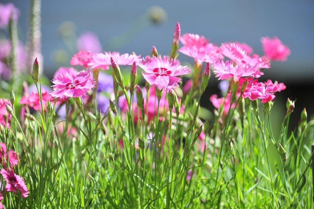 Фестиваль садов и цветов
