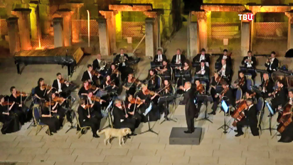 Собака вышла на сцену во время выступления Венского камерного оркестра