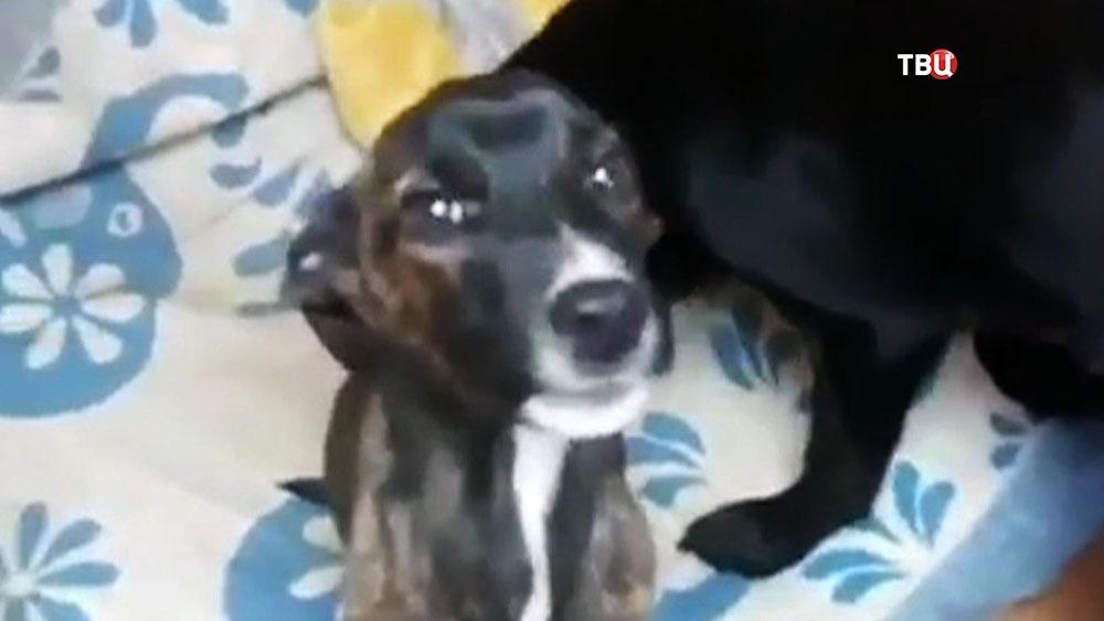 Волонтеры спасли двух оголодавших щенков