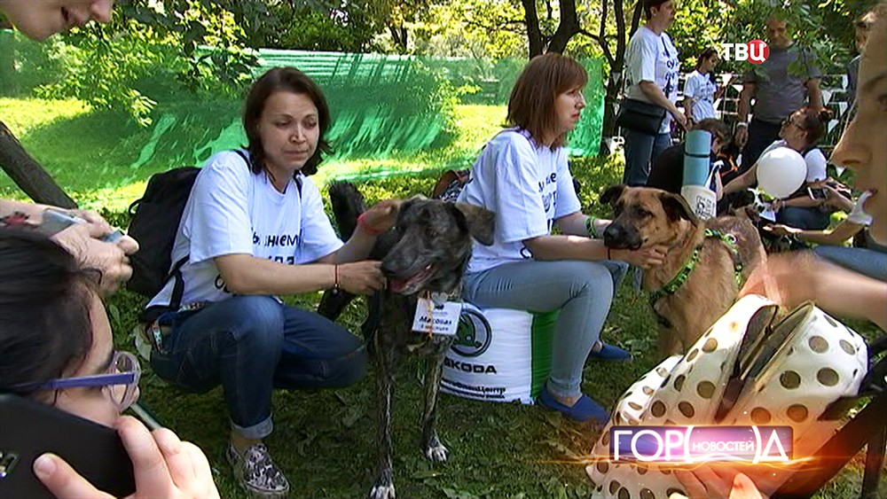 Выставка собак в Новодевичьем парке